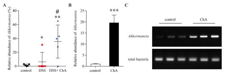 The effects of ChA on Akkermansia . ( A ) Comparison of the relative abundance of Akkermansia in fecal samples of DSS colitis mice analyzed by 16S rRNA gene sequencing; ( B ) A comparison of the relative abundance of Akkermansia in fecal samples of normal mice that were treated with ChA. Akkermansia was quantified with qPCR by amplifying fecal <t>DNA</t> with primers specific for Akkermansia and universal bacterial primers; ( C ) The polymerase chain reaction products were analyzed by electrophoresis in a 2% agarose gel. * p