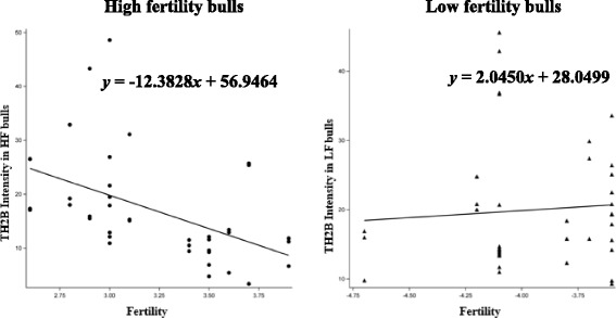 Regression models showing in the intensity of TH2B in sperm as related to fertility scores in bulls. The regression line was determined using the model predicted intensity values for each value of fertility score using the mixed effects model. A scatter plot of unadjusted data points was superimposed on the regression line plot. Regression equations are shown for high fertility ( y = −12.3828 × + 56.9464) and low fertility ( y = 2.0450 × + 28.0499) bulls