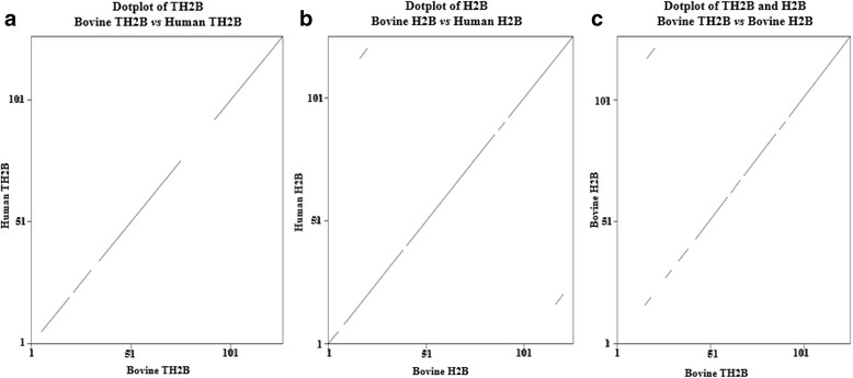 Threshold dotplot of TH2B and H2B between bovine and human. The emboss dotmatcher of predicted TH2B of bull vs. TH2B of human is a perfect diagonal line with two frame shift mutation sites ( a ). The emboss dotmatcher of H2B of bull vs. H2B of human revealed a low complexity region between bovine H2B and human H2B ( b ). Dotmatcher of TH2B of bull vs. H2B of bull showed two areas of different amino acids ( c )