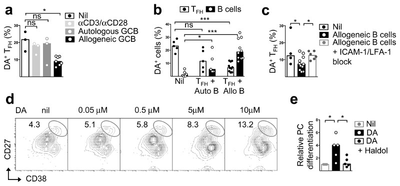"Dopamine is released from T FH cells upon cognate interactions. a-c Flow cytometric quantification of dopamine content in FSK-stimulated T FH cells after 30 min incubation with anti-CD3/CD28 beads (1:1) or autologous or allogeneic GC B cells (1:2) (n=3) ( b ) also showing changes in DA content in GC B cells (autologous or allogeneic) cultured separately (""nil""), or together with T FH cells (n=5); and with or without ICAM-1 (5 μg/ml) and LFA-1 (10 μg/ml) block ( c ) (n=3); Mann-Whitney test. d , Flow cytometric plots showing plasma cells (PCs), identified as CD27 hi CD38 hi , induced in cultures of GC B cells stimulated for five days with anti-CD40 (2 μg/ml), IL-21 (20 ng/ml) and different concentrations of freshly-prepared DA (n=5). e , Fold changes in PC differentiation from GC B cells stimulated for 2h with or without DA (5μM) and Haloperidol (Haldol, 50nM), and cultured in the presence of anti-CD40 (2 μg/ml) and IL-21 (20 ng/ml) for 5d; two tailed student t-test. a-c, e: Bars represent median values and each dot represents a single experiment conducted in triplicates (n=5). Two tailed student t-test; ns, not significant, *p ≤ 0.05, ***p ≤ 0.001."