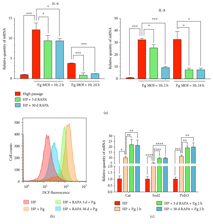 Rapamycin enhances the anti-inflammatory ability of human gingival fibroblasts. (a) The results of real time-PCR show the mRNA expression of inflammatory cytokines IL-6 and IL-8. Both short- and long-term treatments of rapamycin can ease the inflammatory response caused by P. gingivalis infection. (b) FACS analysis shows the reactive oxygen species (ROS) levels in hGFs. Rapamycin treatment alleviates the intracellular ROS level in hGFs caused by P. gingivalis . (c) The results of real-time PCR show (right panel) the mRNA expression of antioxidant components Cat, Sod2, and Prdx3 (∗ means P