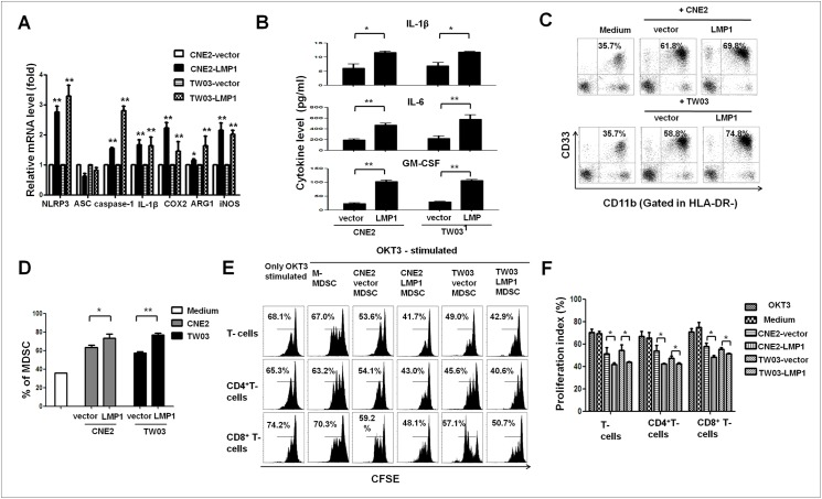 LMP1 promoted NPC-induced MDSC differentiation and the expression of MDSC-related molecules in NPC cells. <t>CD33</t> + cells were isolated from healthy <t>PBMCs</t> using human CD33 MicroBeads and were co-cultured with NPC or NPC-LMP1 cells in a Transwell system for 48 h. The percentage of CD33 + CD11b + HLA-DR - MDSCs was measured by FACS staining. ( A ) Expression of the NLRP3, ASC, caspase-1, IL-1β, COX-2, Arg-1 and iNOS mRNAs was determined via real-time qRT-PCR, and the results were normalized against GAPDH expression. ( B ) NPC cells, including CNE2-vector, CNE2-LMP1, TW03-vector, and TW03-LMP1 cells, were cultured overnight following stimulation with LPS (0.1 μg/mL) and ATP (5 mM, 30 min) or no stimulation. Then, the culture supernatants were collected, and the concentrations of IL-1β, IL-6 and GM-CSF were measured by ELISA. ( C ) Representative density plots are shown as the CD33 + CD11b + cells in the HLA-DR - gate induced by NPC or NPC-LMP1 cells in different combinations. Representative data from 1 of 5 experiments are presented. ( D ) Statistical analysis of the percentage of MDSCs mediated by NPC cells in different combinations. CFSE-labeled PBMCs were co-cultured with M-MDSCs, CNE2-vector-MDSCs, CNE2-LMP1-MDSCs, TW03-vector-MDSCs or TW03-LMP1-MDSCs at a ratio of 1:1 in OKT3-coated 96-well plates. After 3 days, the cells were collected, stained with anti-human mAbs against CD4 and CD8 and quantified by flow cytometry. Representative FACS density plots ( E ) and the statistical data ( F ) showed that the proliferation of PBMCs and CD4 + and CD8 + T cells was markedly suppressed by CNE2-LMP1-MDSCs or TW03-LMP1-MDSCs compared with the effects of CNE2-vector-MDSCs or TW03-vector-MDSCs. Data are presented as the means ± SEM of representative experiments performed in triplicate. *P