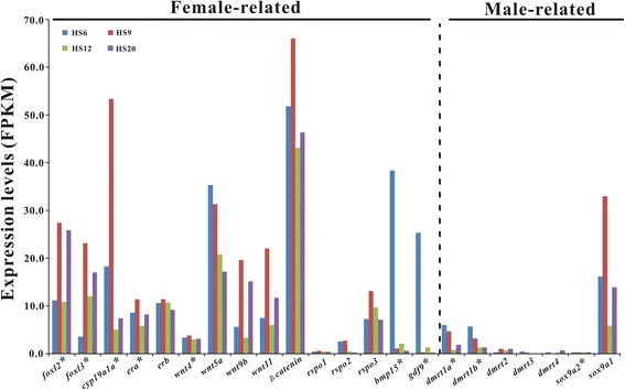 Expression of early gonadal development-related functional genes in gonads of ricefield eel larvae at 6, 9, 12, and 20 dph. Y-axis shows FPKM values of genes inferred from the transcriptome data. The asterisk-marked genes were further analyzed and confirmed by qPCR. HS6: 6 dph; HS9: 9 dph; HS12: 12 dph; HS20: 20 dph