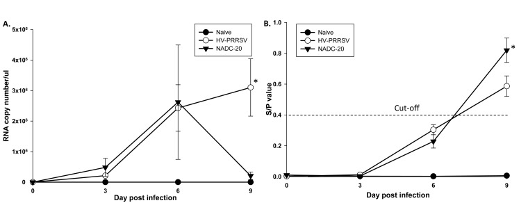 Viremia and PRRSV-specific ELISA Ab profiles after PRRSV infection. (A) PRRSV viral RNA in the serum was determined by real time RT-PCR. (B) Pig serum was assayed for PRRSV-specific antibodies with IDEXX HerdCheck ELISA. The threshold for seroconversion was set at a sample-to-positive (s/p) ratio of 0.4 according to manufacturers' instructions. Each bar represents the average of five pigs ± SEM. *p