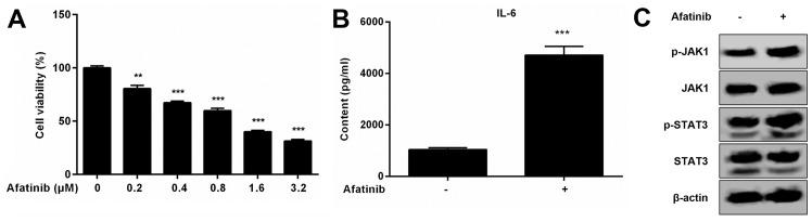 Effects of <t>afatinib</t> treatment on apoptosis and the IL-6/JAK1/STAT3 signaling pathway in H1975 cells. (A) Cell viability was measured with the CCK-8 assay and shown by the absorbance at 450 nm following treatment with various concentrations of afatinib for 24 h. (B) Protein levels of IL-6 from the supernatant of H1975 cells treated with or without 1 µM afatinib were detected by ELISA. (C) Activation of the JAK1/STAT3 signaling pathway was detected in H1975 cells in the presence or absence of 1 µM afatinib by western blot. β-actin was included as an mRNA and protein loading control. Data are representative of three independent experiments and expressed as means ± SEM. **P