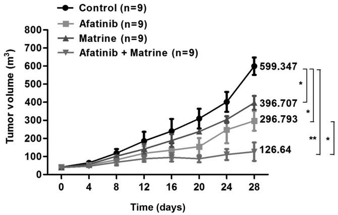 Effects of matrine and afatinib treatment on the growth of H1975 cells in vivo . After 5×10 6 cells were injected subcutaneously under the back skin of 5-to-6-week-old male BALB/c nude mice, mice were treated with or without matrine (5 g/kg) in the presence or absence of afatinib (5 mg/kg) formulated in saline by intraperitoneal injection once daily for 4 weeks and tumor volume was estimated once every three days with the formula: volume = l × w 2 × 0.536, where l and w are perpendicular measured diameters. Data are expressed as means ± SEM. *P