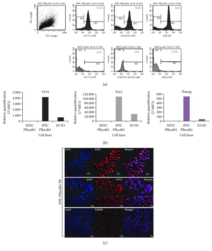 Characterization of iPSC PBscd01 and confirmation of pluripotency. (a) Flow cytometry analyses of OCT4, NANOG, and SOX2 markers in iPSC PBscd01 and OCT4, NANOG, and SSEA-4 markers in the parental cell (MNCscd01). (b) Expression of endogenous pluripotency markers confirmed by qPCR after seven passages. Quantification of the relative expression of OCT4, SOX2, and NANOG genes. Individual reactions of qPCR were normalized against internal controls (GAPDH and β -actin) and plotted against the level of parental cell expression (MNC PBscd01). (c) Immunostaining of the colonies of iPSC PBscd01 showing the expression of pluripotency markers OCT4, SOX2, and NANOG. Nuclei were stained with DAPI (blue). Confocal microscopy.