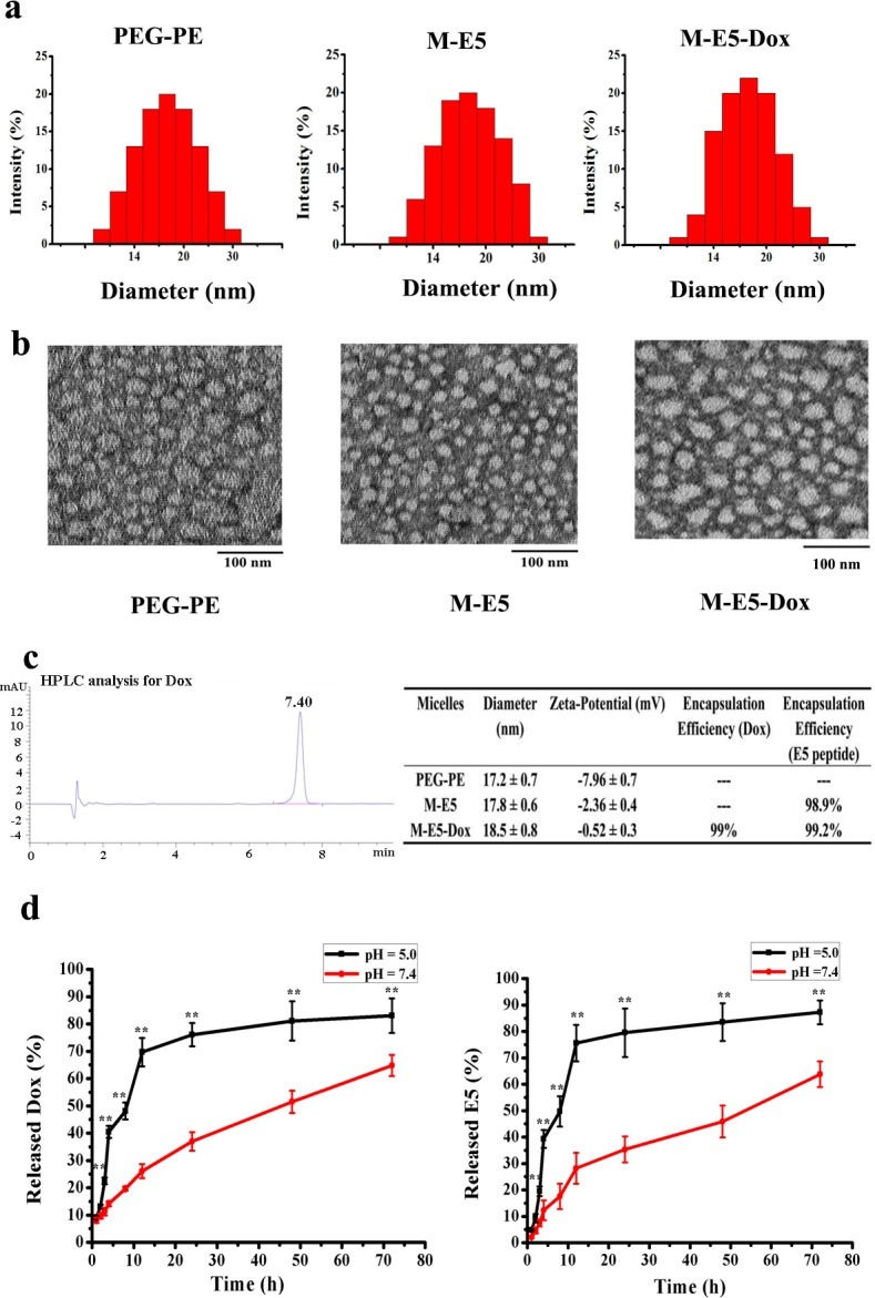 Characterization of micelles in terms of particle size distribution, morphology and drug release kinetics. (a ) Particle sizes of the PEG-PE micelle (50 μM), M-E5 (PEG-PE: 50 μM, E5: 12.5 μM) and M-E5-Dox (PEG-PE: 50 μM, E5: 12.5 μM, and Dox: 5 μM) were determined by DLS. ( b ) The morphology of the PEG-PE micelle (50 μM), M-E5 (PEG-PE: 50 μM, E5: 12.5 μM) and M-E5-Dox (PEG-PE: 50 μM, E5: 12.5 μM, and Dox: 5 μM) was observed via TEM, and the samples were stained with 1% uranyl acetate for 1 min at room temperature. Scale bar = 100 nm. ( c ) The HPLC chromatogram of Dox, and physicochemical properties of the PEG-PE micelle (100 μM), M-E5 (PEG-PE: 100 μM, E5: 25 μM) and M-E5-Dox (PEG-PE: 100 μM, E5: 25 μM, and Dox: 10 μM). ( d ) Time course (0–72 h) release profiles of Dox and E5 from M-E5-Dox (PEG-PE: 100 μM, E5: 25 μM, and Dox: 10 μM) at 37°C and at pH 5.0 and 7.4. Data are presented as mean ± SD ( n = 3). The * represents significant difference between two groups (*p