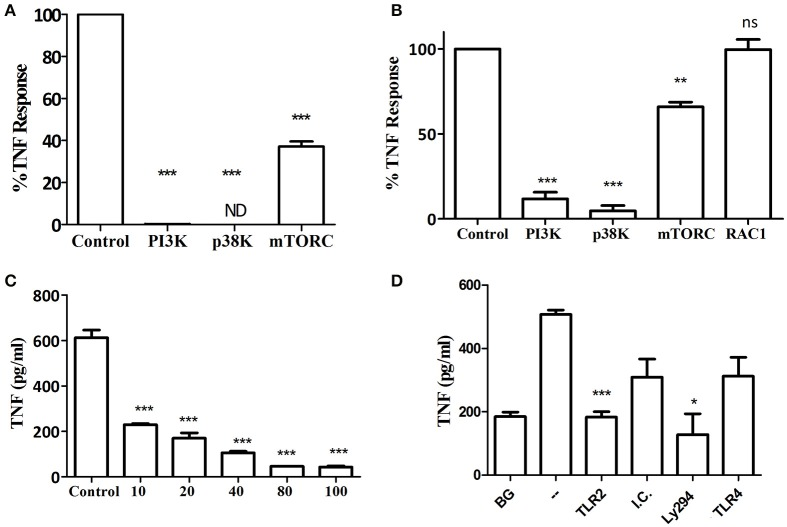 Kinase involvement in the Myd88 −/− response to P. gingivalis . (A) Ly6C+ BM neutrophils or (B–D) BMM were prepared from Myd88 −/− mice and primed with IFN-γ (100 ng/ml for 2 h). (A,B) Inhibitors for PI3K (LY 2940002 100 μM), p38 MAPK (SB 202190 50 μM), mTORC1 (RaPamycin 60 nM) and RAC1 inhibitor (NSC 23766, 50 μM) were added 30 min before challenge with P. gingivalis (MOI 100). DMSO was used as a control at the highest concentration used in the inhibitor wells. Supernatants were collected after overnight stimulation and the percent inhibition of TNF production is shown. (C) Myd88 −/− BMM were similarly primed and Ly294 was added at increasing concentrations 30 min prior to challenge with P. gingivalis . (D) Myd88 −/− BMM were primed with IFN-γ and antibodies (20 μg/ml anti-TLR2 or TLR4 vs. isotype control, I.C.) or LY294 were added prior to challenge with P. gingivalis . * P ≤ 0.05, ** P ≤ 0.01, *** P ≤ 0.005.