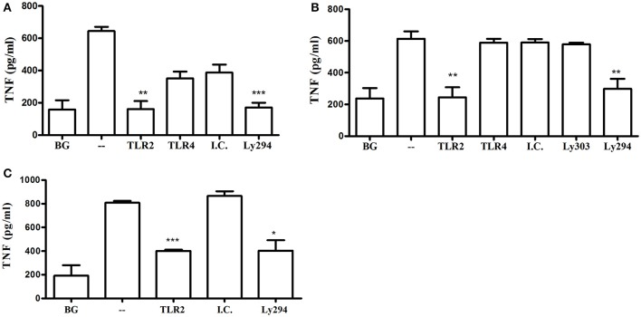 TLR2-PI3K plays a non-redundant role in the murine and human macrophage response to P. gingivalis . WT murine BMM (A) , RAW264.7 macrophages (B) , and PMA-differentiated human THP-1 cells (C) were primed with IFN-γ. TLR2 and TLR4 were inhibited with blocking antibodies vs. isotype control (I.C.) for 1 h and PI3K was blocked with LY294 prior to challenge with P. gingivalis (MOI 10). Supernatants were collected after overnight incubation and TNF was measured by ELISA. Background (BG) represents IFN-γ primed cells not challenged with P. gingivalis . Cells challenged with P. gingivalis without any blocker are referred to in the graphs as (–). Representative graphs of > 3 repeats are shown. * P ≤ 0.05, ** P ≤ 0.01, *** P ≤ 0.005.