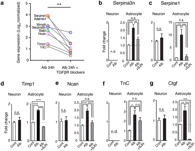 Albumin activated the transcriptional responses of ECM genes via TGFβ receptor signaling. ( a ) The expression levels of ECM-related genes is upregulated across models (marked in bold in A, C) in a separate microarray data set in comparisons between albumin vs. albumin + TGFβ receptor (R) blockers. **p = 0.0078, Wilcoxon signed-rank test, two-tailed. ( b – g ) Quantitative real-time PCR for the mRNA expression of selected genes in primary cortical astrocytic or neuronal cultures at 24 hours following treatment of albumin or albumin plus a specific Alk5 blocker, SJN2511. Results were of three independent primary culture derivations (n = 11 per condition in neurons; n = 10–12 per condition in astrocytes). One way ANOVA with posthoc Turkey's test (in astrocytes) and student t-test (in neurons) were performed. Cont, control; Alb, albumin; SJN, SJN2511; n.d., non detectable (Cq value ≥ 35). *p