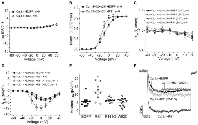RS1 augments Cav1.4-LTCC in HEK cells. (A) Cells transfected with Cav1.4 subunit without other LTCC auxiliary subunits (Cav1.4 + EGFP) do not have functional LTCCs. Co-transfection with Cav1.4 and RS1 do not elicit measurable LTCC currents carried by Ba 2+ ( I Ba ). (B) RS1 enhances the channel voltage-dependent activation (Norm. G) of functional Cav1.4-LTCCs. *Indicates a statistical difference between the two groups (* p