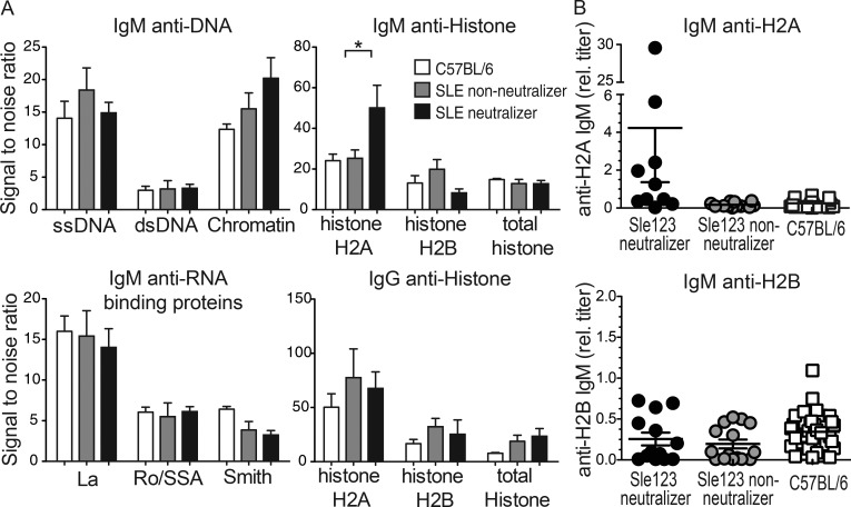 B6.Sle123 HIV-1 neutralizers harbor elevated levels of IgM anti-histone H2A. (A) Sera from B6 (open), B6.Sle123 nonneutralizers (gray), and neutralizers (black) were interrogated with an autoantigen array and results for the IgM reactive with the indicated anti-DNA antigens (top left), RNA-binding proteins (bottom left), and anti-histone antigens (top right), as well as IgG anti-histone antigens (bottom right) are shown. Relative serum titers of (B) IgM anti-H2A (left) and anti-H2B (right) measured by ELISA in B6.Sle123 neutralizers and nonneutralizers. Each symbol represents measurements for one mouse, and all data are plotted as the arithmetic mean ± SEM. P-values were calculated using the Mann-Whitney nonparametric test; *, P