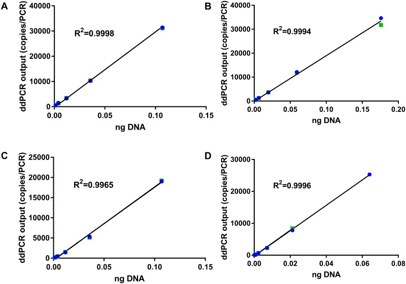Linear regression between ddPCR output (copies/PCR) and DNA amount (ng). DNA was extracted from fresh raw (A) beef, (B) pork, (C) chicken, and (D) turkey. Shown are results from two replicates in green and blue colors.