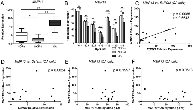 MMP13 is highly expressed in OA chondrocytes with accompanying demethylation in the CpG sites of the MMP13 proximal promoter and is associated with RUNX2 but not OSX gene expression or MMP13 DNA methylation status. Non-cultured primary human chondrocytes were isolated from cartilage obtained from patients with femoral neck fracture (NOF) and OA patients. ( A ) Relative MMP13 mRNA levels were analysed separately in chondrocytes from the superficial (NOF-s) and deep zones (NOF-d) of NOF cartilage by qRT-PCR and normalized against GAPDH. ( B ) Percentage methylation of each indicated CpG site in the MMP13 proximal promoter was analysed in the same samples by bisulfite pyrosequencing. The y-axis shows non-adjusted percentage methylation. ( C – F ) MMP13 gene expression in OA chondrocytes was compared with the levels of RUNX2 mRNA ( C ) or OSX mRNA ( D ), and with the methylation status of the −14 bp ( E ) or −110 bp CpG site in the MMP13 proximal promoter ( E , F ). Values are the mean ± SD. *P