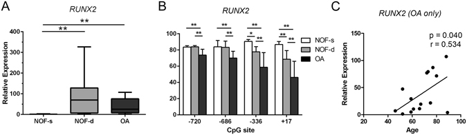 Higher levels of RUNX2 mRNA in deep zone NOF and OA chondrocytes than in superficial zone NOF chondrocytes are associated with the methylation status of specific CpG sites in the RUNX2 P1 promoter. ( A ) Relative mRNA levels of RUNX2 in the superficial (NOF-s) and deep zone (NOF-d) of NOF cartilage and OA cartilage were analysed by qRT-PCR and normalized against GAPDH. ( B ) Percentage methylation of the indicated CpG sites in the RUNX2 P1 promoter were analysed in genomic DNA simultaneously extracted from the same subjects by bisulfite pyrosequencing. The y-axis indicates non-adjusted percentage methylation. ( C ) RUNX2 mRNA levels in OA chondrocytes are plotted against the ages of subjects. Values are the mean ± SD. *P