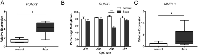 Long-term exposure to 5-aza-dC enhances RUNX2 gene expression associated with DNA demethylation at the −336-bp CpG site. ( A ) Relative mRNA levels of RUNX2 were analysed by qRT-PCR and normalized against GAPDH in untreated (control) and 5-aza-dC-treated cultures. ( B ) Percentage methylation of indicated CpG sites in the RUNX2 P1 promoter was analysed using bisulfite pyrosequencing in the same samples. ( C ) The relative mRNA levels of MMP13 were analyzed in the same samples. Values represent mean ± SD of 6 independent experiments. *P