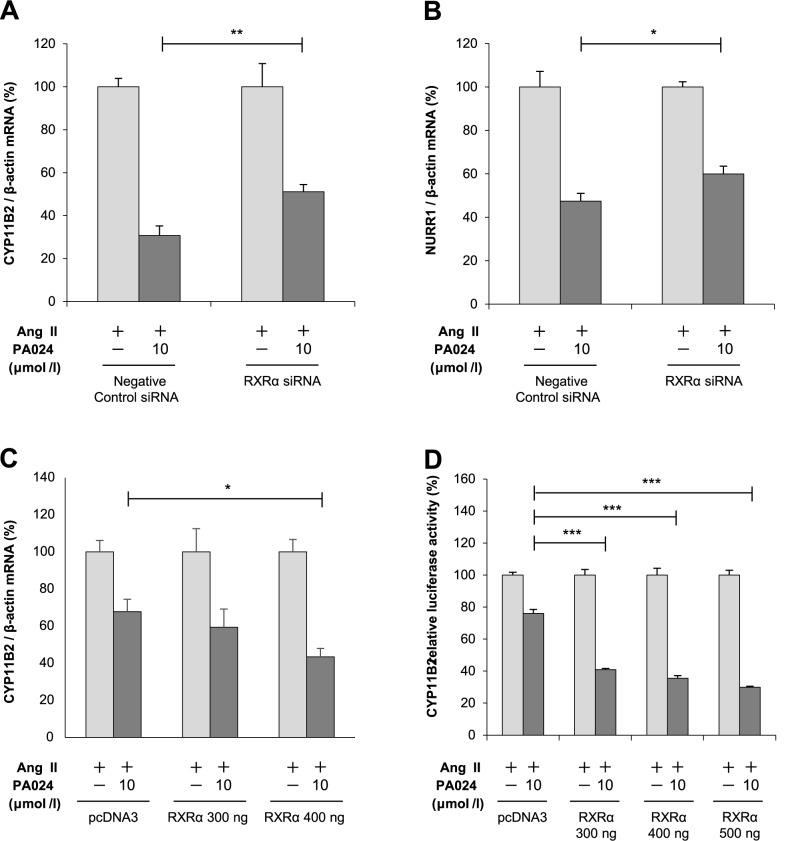 Involvement of RXRα in the suppressive effect of PA024 on CYP11B2 mRNA expression and promoter activity. (A) and (B), effect of RXRα knockdown by its siRNA on the mRNA expression of CYP11B2 and NURR1. H295R cells transiently transfected with siRNA (negative control or RXRα) for 48 h were incubated either in the presence (10 μmol/L) or absence (control) of PA024 for 24 h and co-treated with 100 nmol/L Ang II for the last 6 h. Results are expressed as percentages of each Ang II. Data represent mean ± S.E.M. (n = 4). ** P