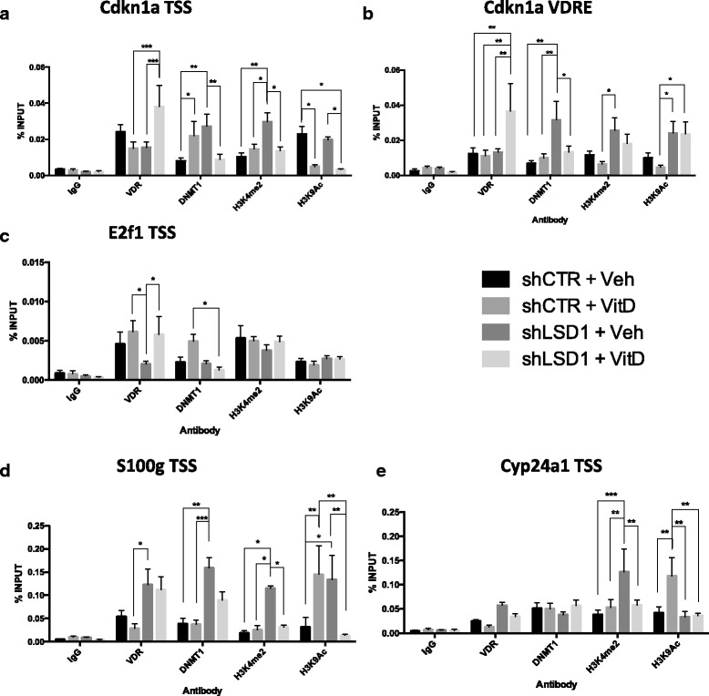 ChIP analysis of BC1A cells stably transfected with shLSD1 lentiviral vector and treated for 24 h with 100 nM 1,25-D 3 . Each bar indicates the percentage of binding relative to INPUT and represents the mean of at least three biological replicates with SEM. The columns indicate, from left to right , shCTR + Veh, shCTR + 1,25-D 3 , shLSD1 + Veh, and shLSD1 + 1,25-D 3 . The basal levels of the following protein/histone marks were evaluated, from left to right , in each graph: IgG , VDR , DNMT1 , H3K4me2 , and H3K9Ac . The regions analyzed were a Cdkn1a TSS, b Cdkn1a VDRE, c E2f1 TSS, d Cyp24a1 TSS, and e S100g TSS. IgG was used as a control for non-specific binding/enrichment. Statistical significance was calculated using one-way ANOVA and Tukey post hoc correction (*** p