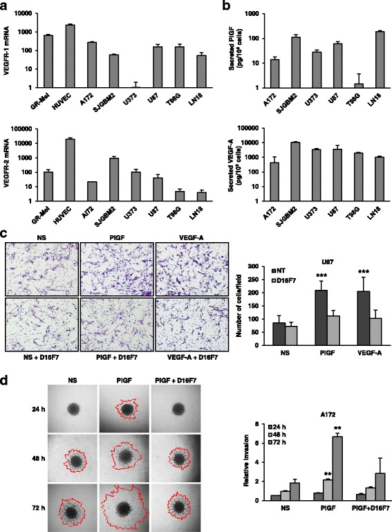 D16F7 inhibitory effects on VEGF-A or PlGF-induced migration and ECM invasion in human GBM cells expressing VEGFR-1. a Detection of VEGFR-1 and VEGFR-2 transcripts in GBM cell lines was performed by qRT-PCR. Results indicate relative mRNA expression and are the mean ± SD of three independent determinations. b PlGF and VEGF-A secretion was quantified by ELISA (mean ± SD, n = 3). c Migration of U87 cells in response to PlGF or VEGF-A was evaluated in the absence (not treated, NT) or presence of 5 μg/ml D16F7; NS, non-stimulated cells. Representative photographs of U87 cells are shown (100× magnification). Histograms represent the mean ± SD ( n = 3) of migrated cells/microscopic field. Results of statistical analysis using one-way ANOVA, followed by Bonferroni's post-test were as follows: PlGF vs NS, PlGF vs D16F7 or PlGF vs PlGF + D16F7 and VEGF-A vs NS, VEGF-A vs D16F7 or VEGF-A vs VEGF-A + D16F7, p