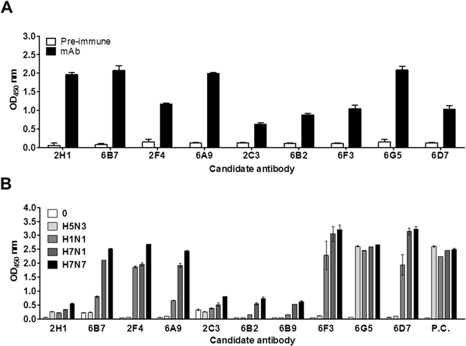Development of H7 subtype-specific antibodies. The fusions were performed using mouse spleen cells inoculated with H7N9 virus rHA1. Ten hybridomas were produced. The secreted antibodies from each hybridoma were tested for recombinant antigen (H7N9 HA1 ( A ) and different influenza subtype virus ( B ) by indirect ELISA. Pre-immune, serum from a healthy mouse; P.C., positive control antibody (anti-influenza A nucleoprotein antibody).