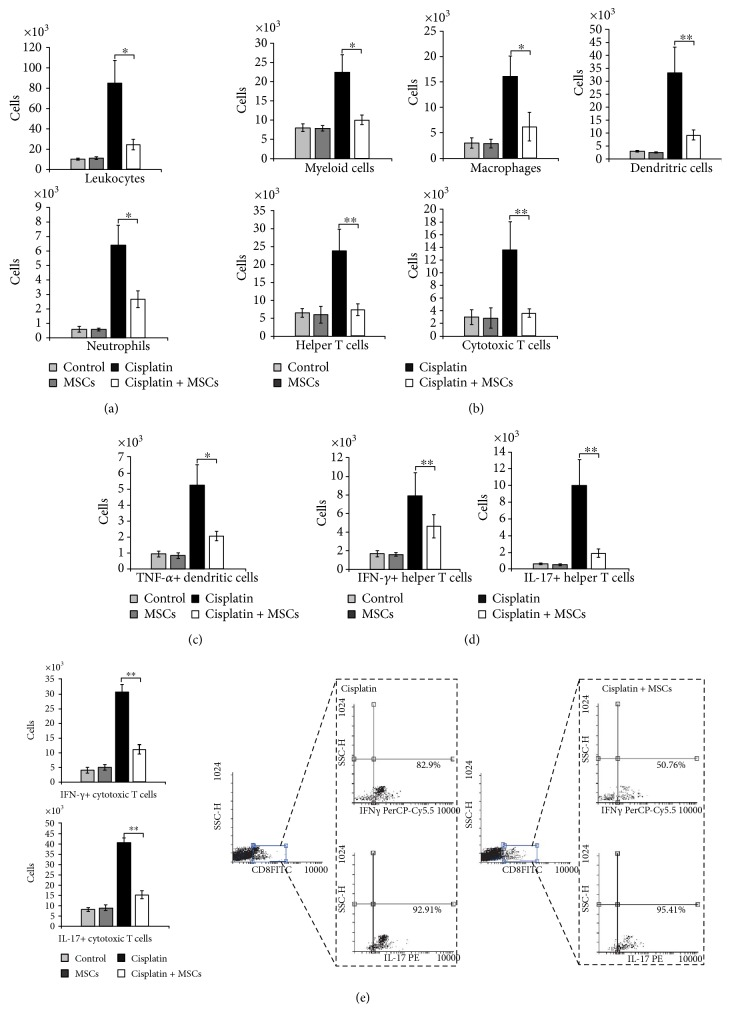 MSCs significantly attenuate influx of immune cells and their capacity to produce nephrotoxic and inflammatory cytokines. Total number of (a) CD45+ leukocytes, (b) CD45+CD11b+ myeloid cells, CD45+F4/80+ macrophages, CD45+CD11c+ dendritic cells, CD45+CD11b+Ly6G+ neutrophils, CD45+CD4+ T helper cells, CD45+CD8+ cytotoxic T cells, (c) TNF- α +CD11c+ dendritic cells, (d) IFN- γ +CD4+ T helper cells, and IL-17+CD4+ T helper cells in cisplatin- and cisplatin + MSC-treated mice. (e) Total number and representative flow cytometry dot plots of IFN- γ - and IL-17-producing cytotoxic CD8+ T cells. Data presented as mean ± SEM; n = 10 mice/group. ∗ p