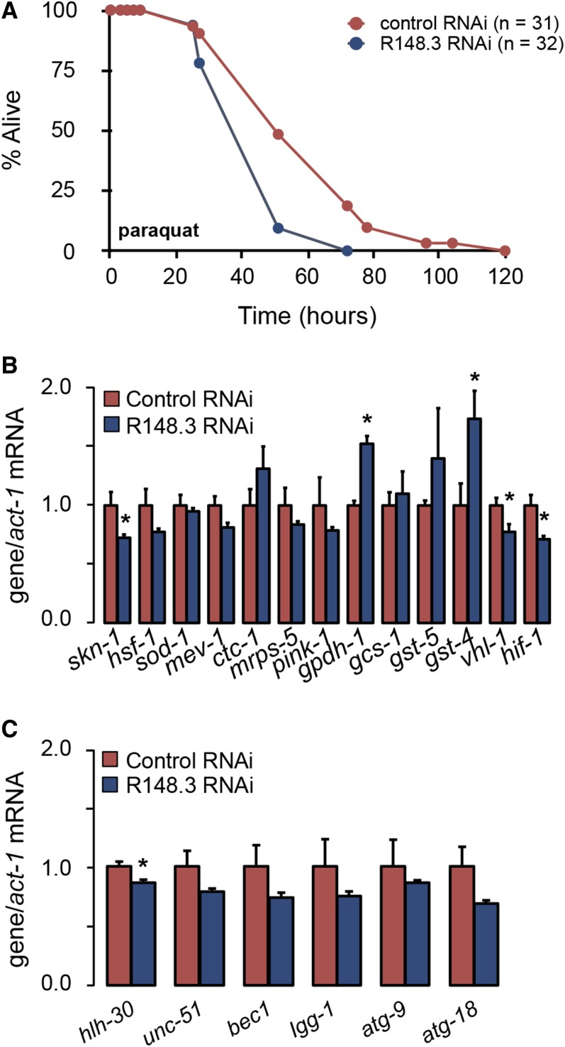 Loss of R148.3 increases susceptibility to oxidative stress. (A) Representative survival curve of adult N2 worms fed either empty vector or R148.3 RNAi, and treated with 100 mM paraquat. See Table S6 in File S2 for additional data on replicate experiments. (B) mRNA levels of genes involved in oxidative stress resistance in adult worms fed either empty vector or R148.3 RNAi. (C) mRNA levels of genes involved in autophagy in control ( RNAi ) and R148.3 ( RNAi ) worms described in (B). For all panels, * P