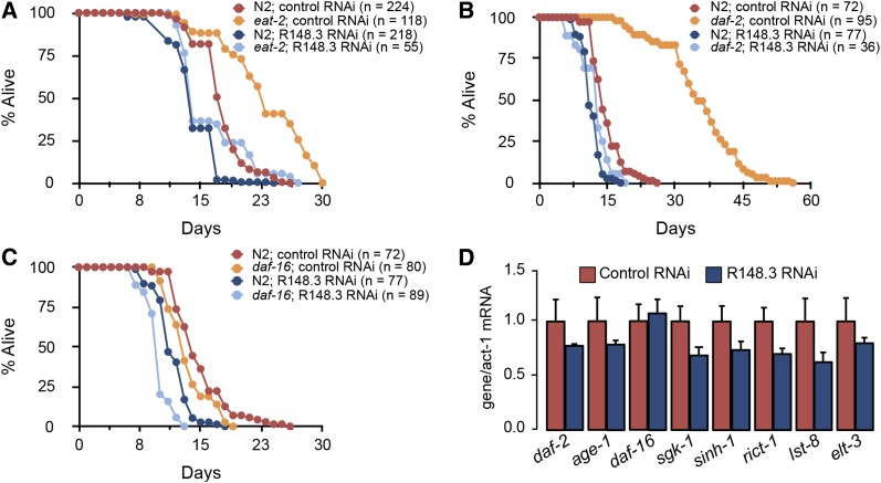 Loss of R148.3 blunts the long-lived phenotype of eat-2 and daf-2 mutants. (A) Representative population survival curve of N2 worms and eat-2 mutants fed either empty vector or R148.3 RNAi ( P