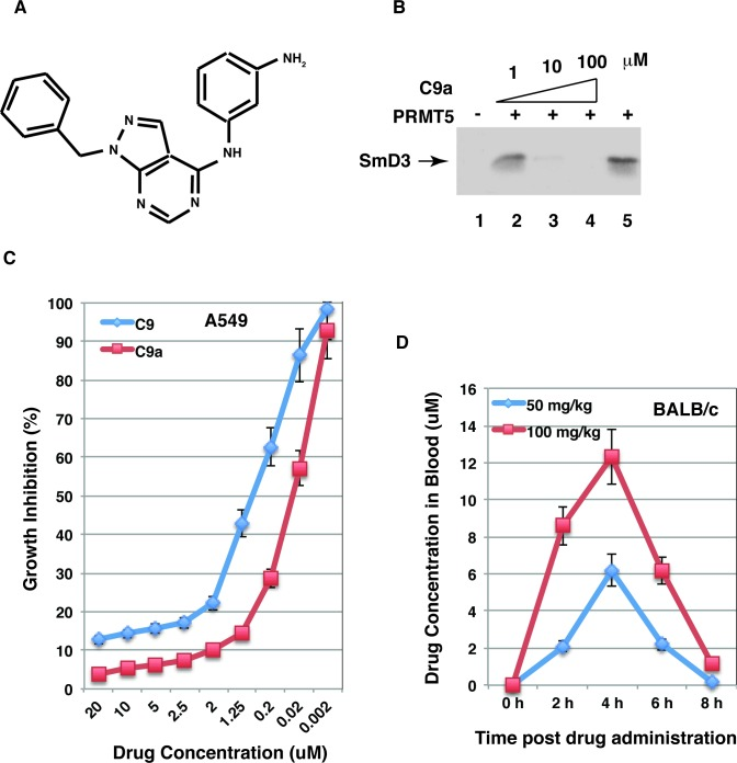 The C9 analogue has improved PRMT5-inhibitory efficacy and oral drug availability. A, The chemical structure of the C9 analogue. B, Compound C9a inhibited methylation of SmD3 by PRMT5. The recombinant SmD3 (2 μg) was used as the substrate in the absence (lane 5) or presence of 1, 10 or 100 μM compounds as indicated. Lane 1 shows the product of the reaction without the enzyme. C, C9a has improved efficacy to inhibit lung cancer growth. A549 cells were cultured in the presence of various concentrations of C9 or C9a and growth inhibition was determined by cell counting 2 days post the compound treatment. D, C9a has improved oral drug availability in the mouse. Male BALB/c mice were randomized and administrated C9a by oral gavage and compound concentrations in blood samples were determined.