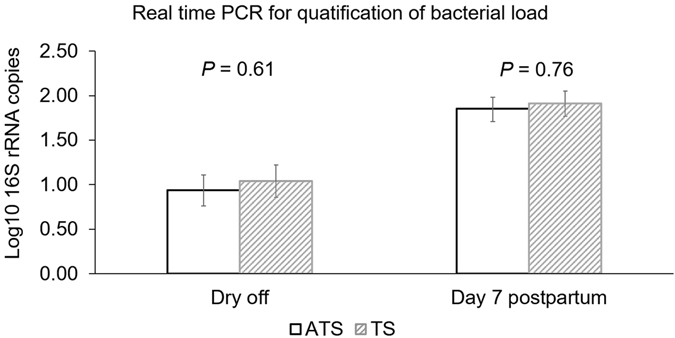 Bar graph illustrating the bacterial load measured as mean log10 number of the <t>16S</t> <t>rRNA</t> gene identified in milk samples of cows enrolled either on with antibiotic (ceftiofur hydrochloride) and teat sealant (ATS) or just teat sealant (TS) at dry off and 7 days postpartum. Error bars correspond to standard error of the mean.