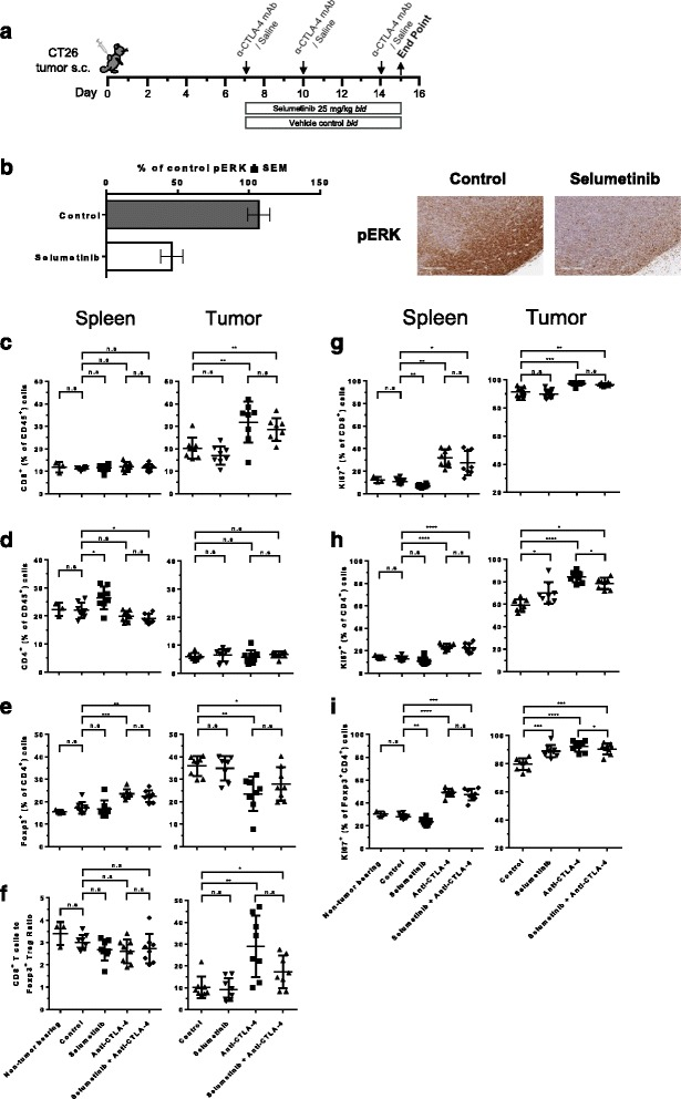 Frequency and effector function of T-cells following selumetinib, anti-CTLA-4 and combination treatment in vivo. a Schema showing treatment schedule. b Immunohistochemical analysis of tumors for p-ERK 1 h following the last dose with 25 mg/kg selumetinib bid (3 doses in total, over 24 h) or vehicle control. Following 8 days of anti-CTLA-4, selumetinib or combination treatment, cells isolated from spleens and tumors were analysed by flow cytometry analysis. Spleens from non-tumor bearing BALB/c mice were also included in the analysis. c CD8 + T-cell and ( d ) CD4 + T-cell populations are presented as percentages of CD45 + cells. e Frequency of Foxp3 + CD4 + regulatory T-cells (Tregs) of total CD4 + T-cells. f Ratio of CD8 + T-cells to Tregs. Effects of treatment on the frequency of Ki67-positive cells ( g ) of total CD8 + T-cells, ( h ) CD4 + T-cells or ( i ) Tregs. Data points in scatter plots represent individual animals, treatment groups each contained 8 mice. Plotted are means ± SD. * P
