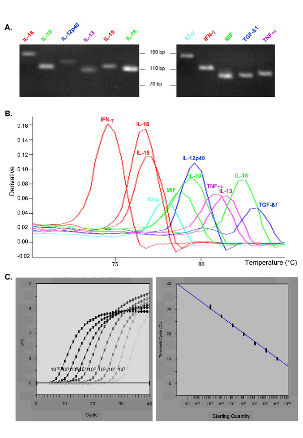Primer validation. A. Agarose gel electrophoresis of several CyProQuant-PCR products generated by amplification of a pool of cDNA from PBMC stimulated in vitro by LPS or PHA. Scale is shown in base pairs (bp). B. Dissociation curve analysis of these CyProQuant-PCR products. Negative derivative of the fluorescence is plotted against temperature. The single peak shows that SYBR Green fluorescence detects only the specific CyProQuant-PCR product. C. Amplification plots and standard curve resulting from the amplification of a range of β2-MG external RNA standard using CyProQuant-PCR.