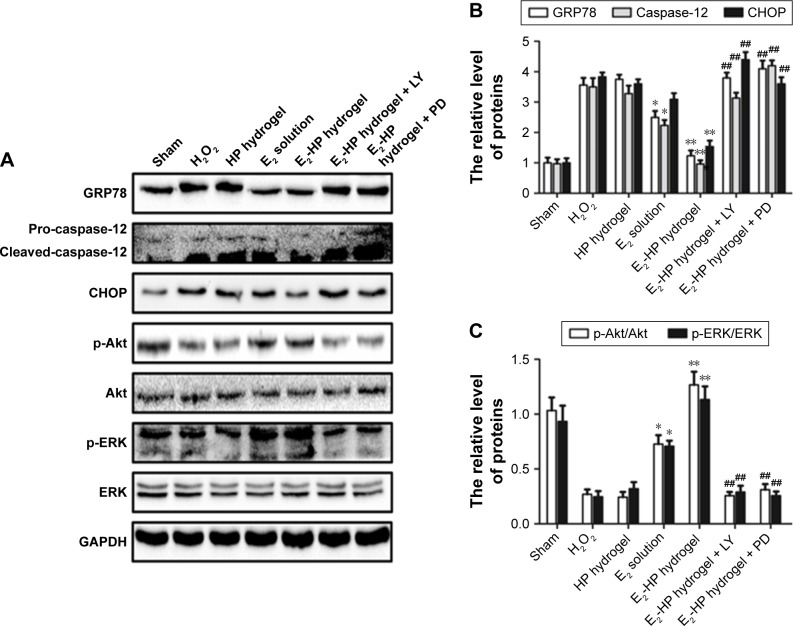 The activation of Akt and ERK1/2 is crucial for the protective effect of E 2 -HP hydrogel in H 2 O 2 -induced ER stress in EECs. Notes: ( A ) The protein expressions of GRP78, caspase-12, CHOP, p-Akt, and p-ERK1/2 in ER stress-induced apoptosis in EECs treated with E 2 -HP hydrogel and different inhibitors. GAPDH was used as the loading control and for band density normalization. ( B ) The optical density analysis of GRP78, caspase-12, and CHOP protein. ( C ) The optical density analysis of p-AKT and p-ERK protein. * P