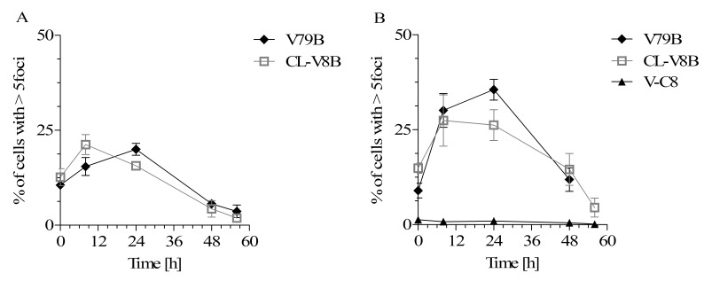Kinetics of Rad51 foci formation in V79B and CL-V8B cells after (A) BLM and (B) MMC exposure. V-C8 defective in Brca2 / Fancd1 (HR and Fanconi anemia pathway) represent control cell line with Rad51 foci impairment. Data represent mean values from at least three independent experiments. Error bars represent standard error. BLM, bleomycin; MMC, mitomycin C; HR, homologous recombination.
