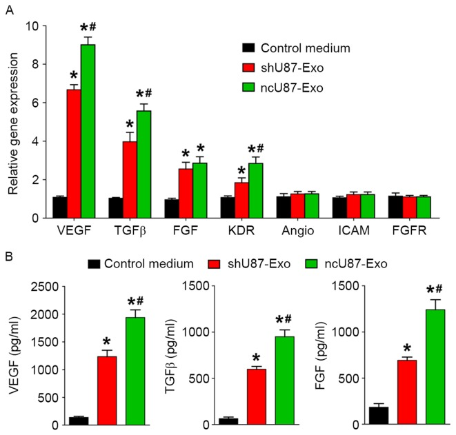 ncU87-Exo and shU87-Exo regulate angiogenesis related-genes and protein expression in HUVECs. (A) qRT-PCR analysis of the expression level of angiogenesis-related genes in HUVECs treated by ncU87-Exo and shU87-Exo. Compared with the shU87-Exo group, ncU87-Exo significantly upregulated VEGF, TGFβ, FGF and KDR gene expression. (B) ELISA analysis of the secretion level of angiogenesis-related proteins in HUVECs treated by ncU87-Exo and shU87-Exo. Compared with the shU87-Exo group, ncU87-Exo significantly increased VEGF, TGFβ, and FGF protein secretion. (*P