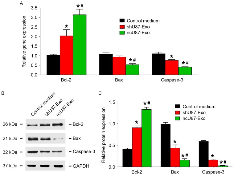ncU87-Exo and shU87-Exo regulate the expression of apoptosis-related factors in HUVECs induced by hypoxia. (A) qRT-PCR analysis of the expression level of apoptosis-related factors Bcl-2, Bax, and caspase-3 in HUVECs treated by ncU87-Exo and shU87-Exo after hypoxia. Compared with the control medium group and the shU87-Exo group, ncU87-Exo significantly upregulated Bcl-2 gene expression and inhibited Bax and caspase-3 gene expression. (B and C) Western blot analysis revealed that both ncU87-Exo and shU87-Exo increased Bcl-2 expression and decreased Bax and caspase-3 expression, while ncU87-Exo was more efficient. (*P