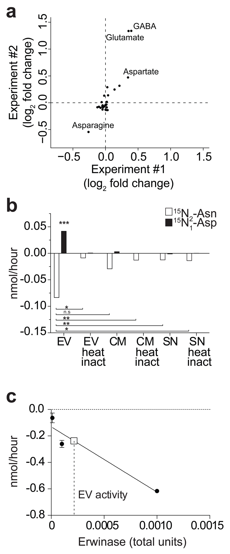 NSC EVs are metabolically active in vitro . (a) Scatter plot of metabolomics experiment showing log 2 fold changes of extracellular metabolites in medium + EVs vs . Vehicle as in a . Positive/negative values indicate production/consumption of metabolites, respectively. Data from two independent experiments are shown. (b) Barplot of the consumption of 15 N 2 -Asn and production of 15 N-Asp mediated by EVs, conditioned medium (i.e. CM, medium with EVs) and supernatant (i.e. SN, medium deprived of EVs), with or without heat inactivation (100°C for 10'). Data are mean ± SEM and have been obtained from n= 2 independent experiments. Statistical analysis was performed using one-way ANOVA, followed by Bonferroni's test correction. * p
