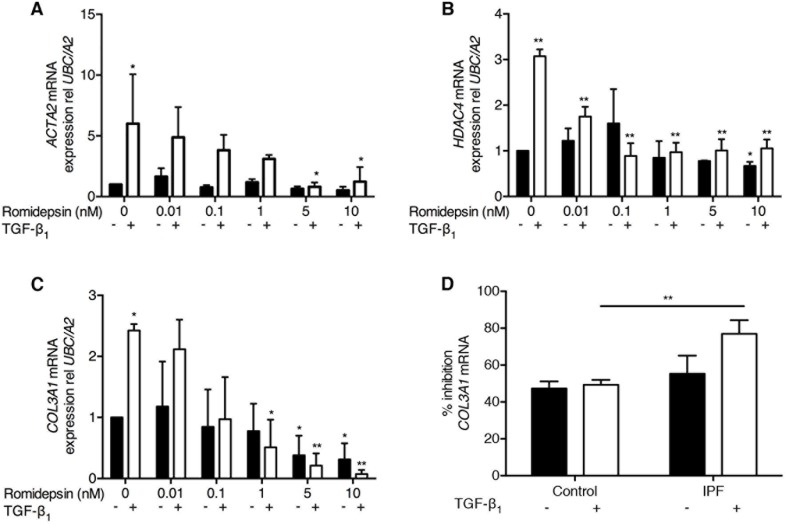 Romidepsin suppressed myofibroblast differentiation: Fibroblasts were cultured in DMEM/FBS ± TGF-β1with the indicated concentration of romidepsin for 48 hours and then samples harvested into Trizol for RNA isolation, cDNA synthesis and RTqPCR analysis Figure shows mRNA expression of A . ACTA2 B . HDAC4 and C . COL3A1 mRNA in IPF fibroblasts in response to romidepsin in the absence (solid bars) or presence (open bars) of TGF-β1. D . Inhibition of COL3A1 mRNA expression by 5nM romidepsin ± TGF-β1 in normal or IPF fibroblasts expressed as a percentage of the corresponding untreated control. Data were normalized to the housekeeping genes UBC/A2 using the ΔΔCT method. Data are presented as mean + SD ( n = 3; two-way ANOVA with Dunnett's multiple comparisons). *P