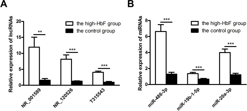 Validation of microarray data by qRT-PCR (A) Three up-regulated lncRNAs and (B) three up-regulated miRNAs were validated by qRT-PCR using RNA extracted from reticulocytes of 13 subjects with HPFH and β-thalassemia minor with high HbF and 13 controls. The relative expression level of each RNA was normalized, and the data displayed in histograms are expressed as the means ± SD, **P