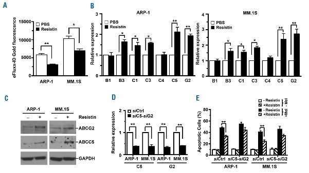 Resistin increases the expression of ABC transporters in myeloma cells. ARP-1 and MM.1S myeloma cells were cultured with resistin (50 ng/mL) for 12 h. Some of the cultured cells were labeled with eFluxx-ID gold fluorescent dye and further analyzed by flow <t>cytometry.</t> Others were subjected to RNA or protein extraction for real-time PCR or western blot analysis. (A) Intracellular eFluxx-ID gold fluorescence intensity was quantified. PBS, phosphate-buffered saline solution (controls). (B) Real-time PCR shows relative mRNA expression of ABC transporter genes. (C) Western blot analysis shows expression of ABCG2 and ABCC5 proteins. Cells cultured without resistin served as controls. GAPDH served as a protein loading control. (D) Real-time PCR analysis shows relative expression levels of ABCC5 and ABCG2 mRNA in ARP-1 or MM.1S cells bearing non-targeted siRNA ( si Ctrl) or the pooled siRNA of ABCC5 ( si C5) and ABCG2 ( si G2). (E) The percentages of apoptotic cells in si Ctrl- or both si C5- and si G2-expressing ARP-1 or MM.1S cells treated with or without resistin or melphalan (Mel) are shown. Results are representative of three independent experiments. * P
