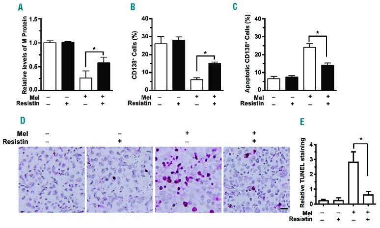 Resistin protects myeloma from chemotherapy in vivo . SCID mice were injected with ARP-1 myeloma cells (5×10 5 cells per mouse) directly into the femur (n=5 mice per group). Three weeks after ARP-1 cell injection, mice began intraperitoneal treatment with melphalan (Mel; 50 μg/mouse), resistin (20 μg/mouse), or both every 3 days for 3 weeks. After treatment, the mouse sera were subjected to enzyme-linked immusorbent assay to measure M-protein levels. After the mice had been euthanized, the cells flushed from each mouse's femoral bone marrow cavity were labeled with an antibody against human CD138, and the CD138 + cells were sorted by flow cytometry. CD138 + cells were subjected to an annexin V binding assay to determine cell apoptosis. The mouse femora were analyzed with an in situ TUNEL assay. Mice that received neither melphalan nor resistin served as controls. (A) Relative levels of M-proteins. (B) Percentages of CD138 + cells. (C) Percentages of apoptotic CD138 + cells. (D) Representative images of TUNEL + cells in bone marrow. (E) Quantitative analysis of TUNEL staining. Bar: 20 μm. Original magnification × 200. The results shown represent averages ± SD (n = 5 mice/group, 3 replicate studies). * P
