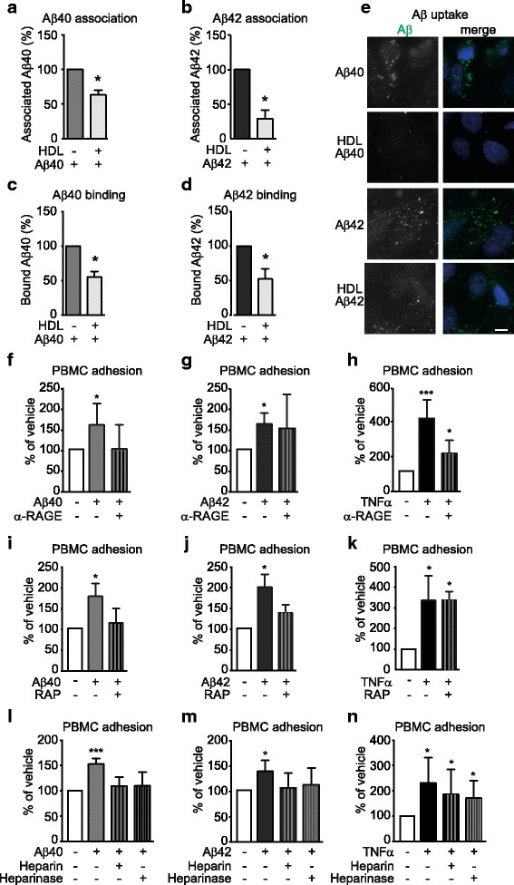 HDL reduces Aβ association, binding and uptake to hCMEC/D3 whereas blocking Aβ binding or uptake reduces PBMC adhesion to hCMEC/D3. a-d hCMEC/D3 were pre-treated with 100 μg/mL of HDL and 0.1 μM a,c Aβ40 or b,d Aβ42 monomers as described in Fig. 2 at either 37 °C (association a,b ) or at 4 °C (binding c,d ). Cells were lysed in RIPA buffer and Aβ were measured using commercial ELISA. e hCMEC/D3 were pre-treated with HDL (1 mg/mL) for 2 h before stimulating with 1 mM of fluorescently labelled Aβ40 or Aβ42 monomers. Scale bar represents 10 μm. f-n hCMEC/D3 were pre-treated with ( f-h ) RAGE blocking antibody, i-k RAP or l-n heparin or heparinase III 60 min before stimulation with Aβ40 or Aβ42 monomers or TNF-α for 3 h. PBMC adhesion assays were conducted as described in Fig. 2 . Graphs represent means ± SD relative to vehicle treated cells for at least 3 independent trials. * p