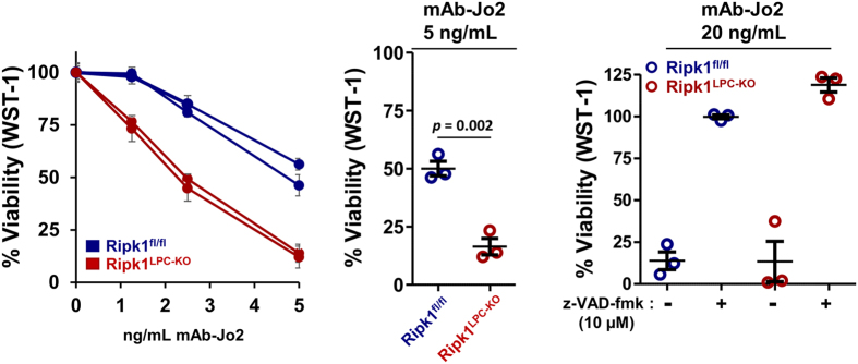 RIPK1 deficiency increases the sensitivity of primary hepatocytes to Fas-agonist stimulation. Primary cultures of hepatocytes issued from Ripk1 fl/fl ( n = 2) or Ripk1 LPC-KO (n = 2) mice were subjected during 16 h to mAb-Jo2 concentrations ranging from 1 to 5 ng/mL in presence of ETA (1 µg/mL) (left panel). Additional primary cultures (n = 3 for each strains) were exposed to a unique dose of mAb-Jo2 (5 ng/mL) also in presence of ETA (1 µg/mL) for statistical analysis (middle panel). In parallel, these primary hepatocyte cultures were subjected during 16 h to mAb-Jo2 at 20 ng/mL in presence of ETA (1 µg/mL) and in absence or presence of the z-VAD-fmk pan-caspase inhibitor (right panel). Cell death was analysed by WST-1 based assay and data are expressed as a percentage of signal obtained in basal survival conditions without Fas-agonist. Error bars corresponds either to internal triplicates for each primary cultures (left panel) or to triplicates of independent primary cultures (middle and right panels).