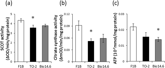 SCOT and citrate synthase activities and ATP content. ( a ) SCOT and ( b ) citrate synthase activities as well as ( c ) ATP content of left ventricles of F1B, TO-2, and Bio 14.6 hamsters. Data are mean ± SEM of six animals per group. * P