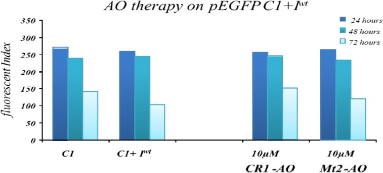 Time dependent effect of antisense oligonucleotide (AO) treatment on fluorescent index (FI) in pEGFP C1 +I wt transfected cells. EGFP activity in K562 cells co-transiently transfected with AOs and pEGFP + I wt plasmid. The activity of EGFP was normalized to total cellular EGFP fluorescence and is presented as FI. This figure shows that CR1-AO and Mt2-AO did not influence EGFP expression in cells co-transfected with pEGFP C1 + I wt plasmid