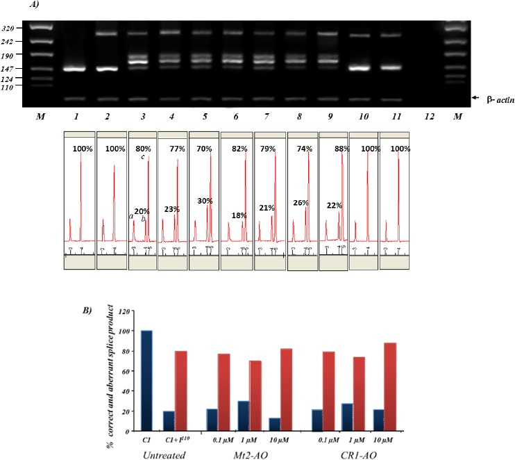 Dose-dependent effects of antisense oligonucleotide (AO) treatment on pEGFP C1 +I 1-110 transfected cells. (A) RT-PCR analysis on K562 cells co-transiently transfected with AOs and pEGFP C1 + I IVSI-110 plasmid. Lane 1-3 correspond to untreated and pEGFP C1 and pEGFP C1 + I wt , pEGFP C1 + I IVSI-110 , respectively. Lanes 4-5 correspond to cells co-transfected with pEGFP C1 + I IVSI-110 and Mt2-AOs at 0.1, 1 and 10 μM, respectively. Lanes 6-9 correspond to cells pEGFP C1 + I IVSI-110 co-transfected with CR1-AOs at 0.1, 1 and 10 μM, respectively. Lane 10 and 11 correspond to pEGFP C1 + I wt co-transfected with Mt2-AO and CR1-AO at 10 μM concentration, respectively. (B) Relative amounts between normal (blue) and aberrant (red) splice RT-PCR products following AO therapy. Using Mt2-AO and CR2-AO at 1 μM resulted in 10% and 6% increase in normal splicing, respectively
