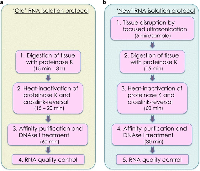 Comparison of workflow of the 'old'(classical) and 'new' protocol for RNA isolation from deparaffinised, stained and laser-capture microdissected FFPE tissue. a Workflow of the 'old' RNA isolation protocol, starting with proteinase K digestion of the sample. b Workflow of the 'new' isolation protocol, starting with a focused ultrasonication step to disrupt the tissue prior to proteinase K digestion. Values in brackets indicate the approximate timing for each step