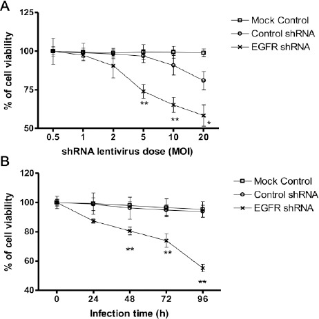 EGFR down-regulation results in RB cell death in a dose and infection time-dependent manner. Weri-Rb-1 cells were (A) infected with ascending doses of <t>shRNA</t> <t>lentiviruses</t> and incubated for 48 hr, or (B) infected with 5 MOI shRNA lentiviruses and incubated for up to 96 hr, and then cell viability was analyzed. Data shown are mean±SD of three independent experiments. *, P