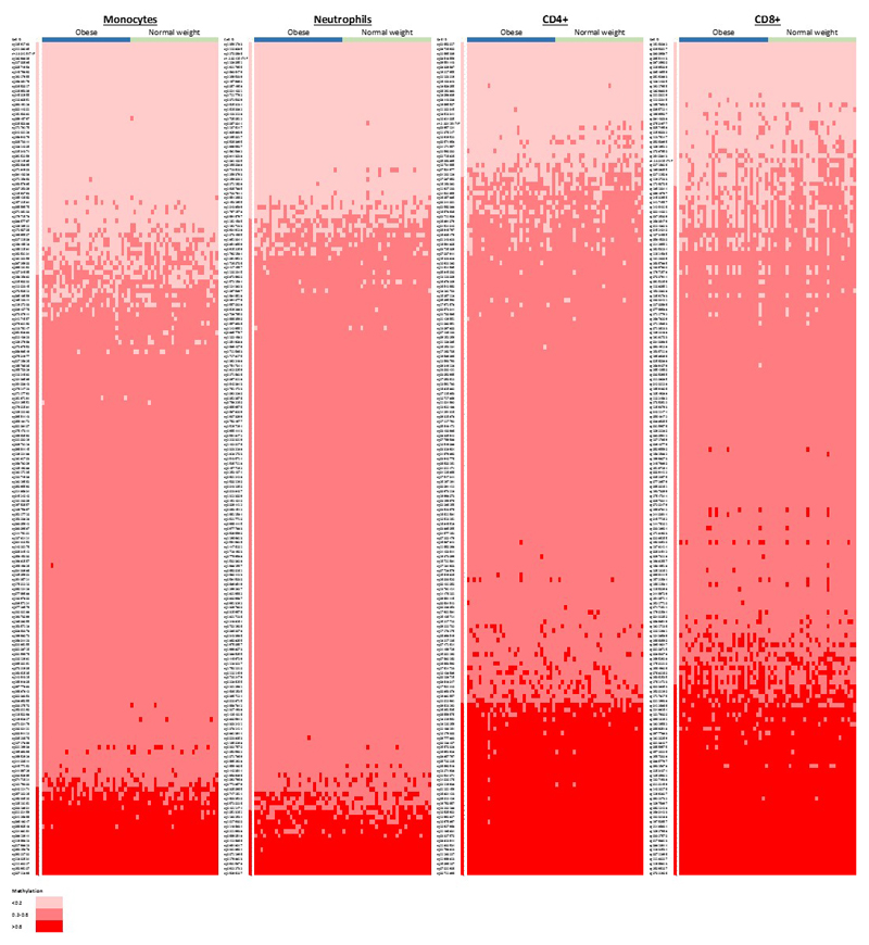 <t>DNA</t> methylation at the sentinel CpG sites in whole blood and in 4 isolated cell subsets (Monocytes, Neutrophils, CD4+, CD8+) from 60 individuals (30 obese cases, and 30 normal weight controls) by <t>Illumina</t> MethylationEPIC array, which quantifies 179 of the 187 sentinel markers. Results are shown as a heatmap, coded by methylation value (hypomethylation