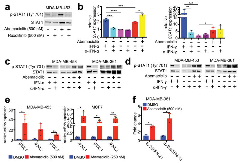 CDK4/6 inhibition mediates Type III interferon production a , Phospho- and total STAT1 in MDA-MB-453 cells treated with abemaciclib +/− ruxolitinib for 7d. b , Effect of neutralization of IFN-α or IFN-γ on STAT1 mRNA expression (n=2–4). c – d , Impact of neutralization of IFN-α (c) and IFN-γ (d) on phospho-STAT1 and total STAT1 protein in indicated cell lines. e , Expression of type III interferon genes in indicated cell lines treated with abemaciclib for 7d compared to DMSO (n=3). f , Type III interferon production measured by ELISA (7d, n=2). Unpaired two-tailed t-tests (e–f) adjusted for multiple comparisons (b). Error bars, SD. *p
